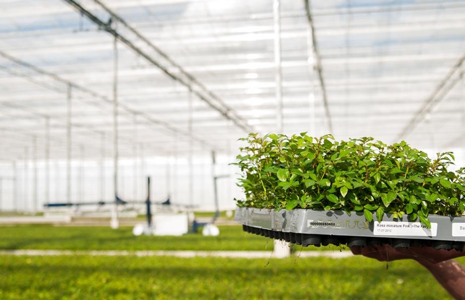 Kwaliteit voor planten, klanten en medewerkers bij Rötjes Young Plants